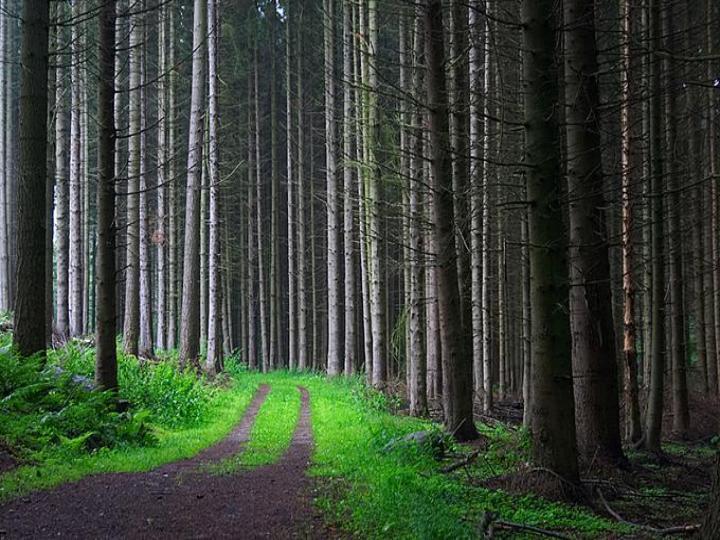 path thru the elms